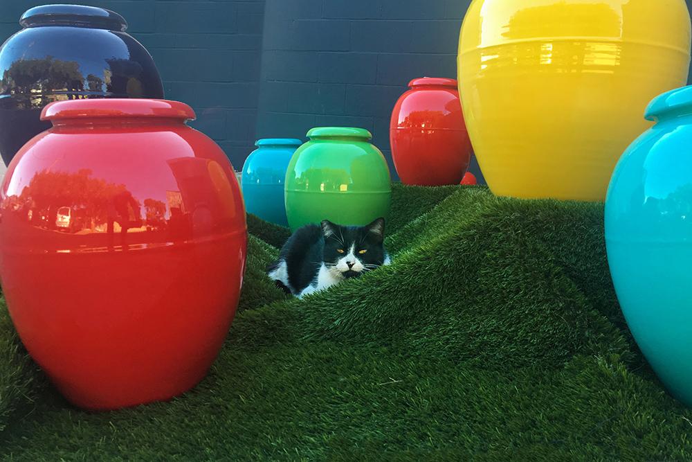 Showroom Cat